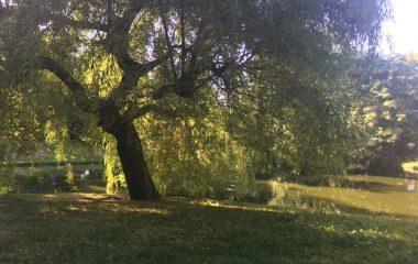Stadtpark_1